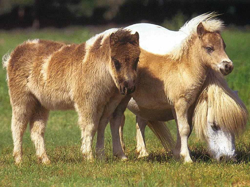 Конь красивый