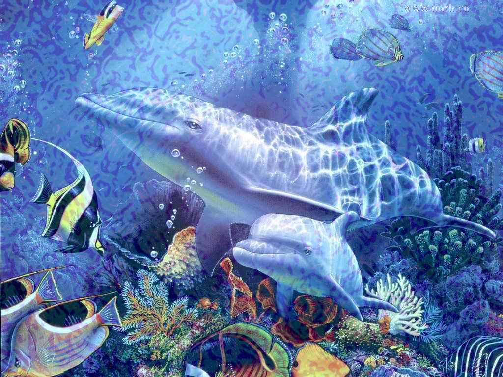 Тропические рыбы медузы скаты акулы